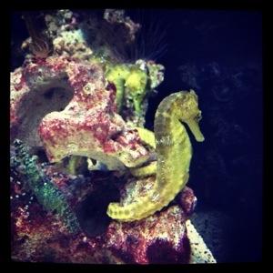午後に家族でホノルル水族館に行きました。ファミリーパスは60ドルで一年間利用し放題!