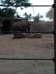 アジアゾウのサリーちゃん。砂浴びをしています。