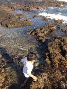 家族で近くの海に。磯で魚とかカニを捕まえてあそびましたー。