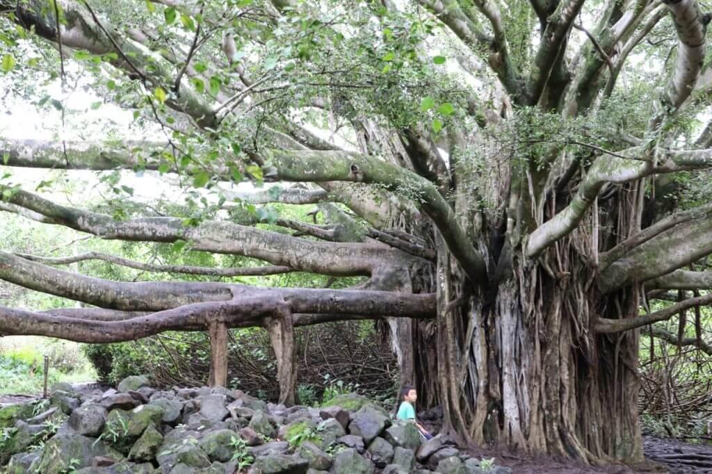 ハワイで大家:Piiwai Trail 3